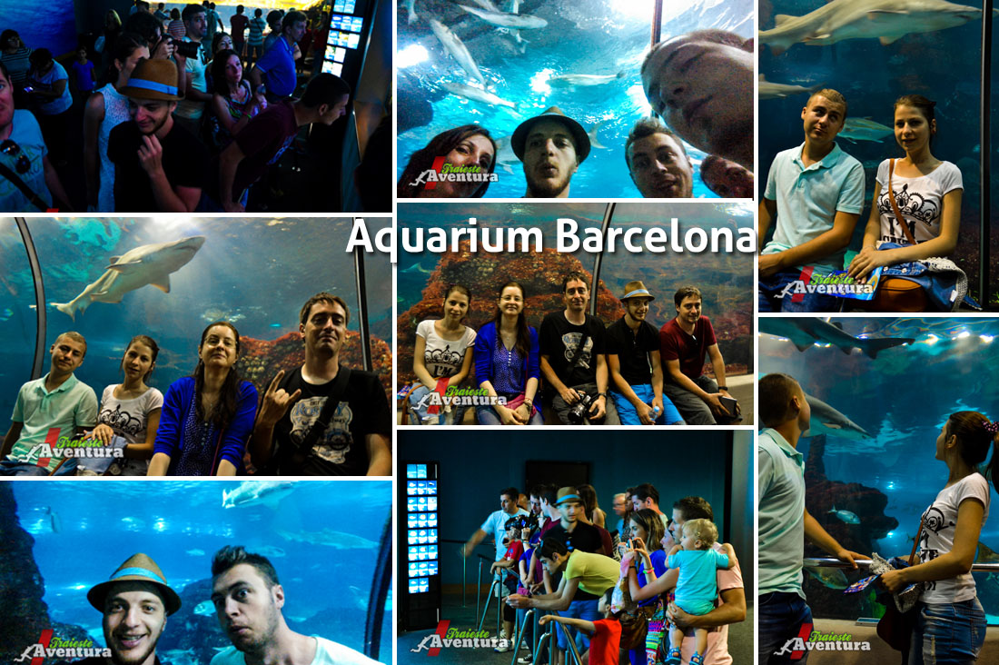 aquarium 2 wallpaper